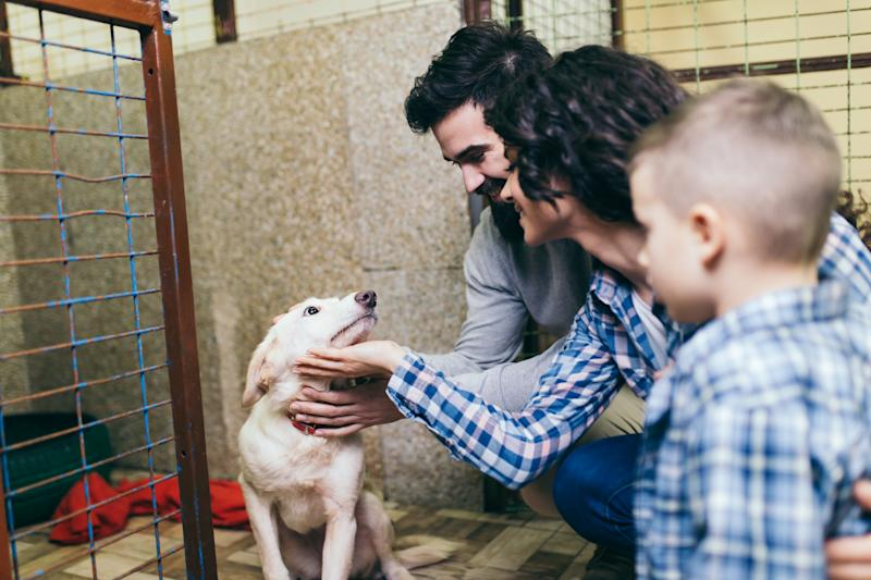 An estimated 6.5 million pets are currently in shelters across the United States, and they are eagerly waiting to find their forever homes. (Photo: Getty Creative)