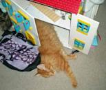 A ginger cat catches a few Z's in a playhouse.