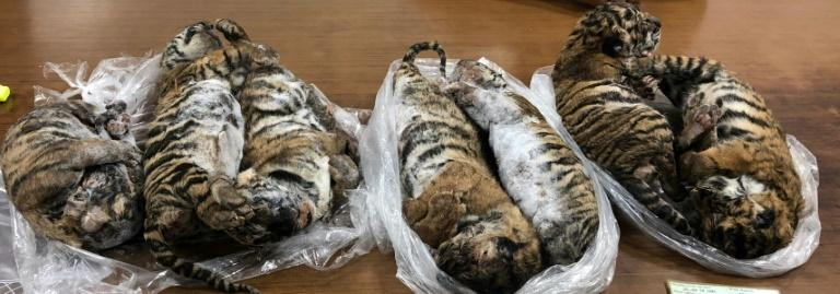 Conservation group Traffic called for action to prevent further tiger losses with fewer than 3,900 of the big cats etimated to be left in the wild (AFP Photo/Nam GIANG)