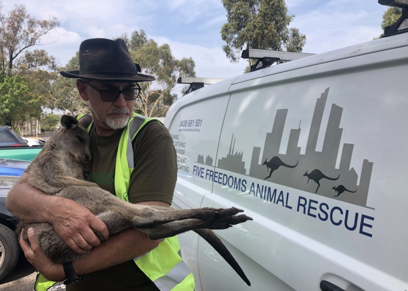 Wildlife carer Manfred Zabinskas holds a rescued kangaroo in his arms. His van with Five Freedoms Animal Rescue written on it is in the background.