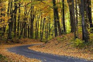Fall Color Tours Along Benzie County's Sleeping Bear Dunes National Lakeshore