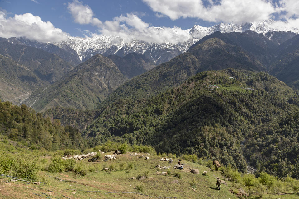 Gaddi shepherds stop with their flock of sheep and goats at a temporary shelter against a backdrop of the snow-covered Dhauladhar range of the Himalaya in Dharmsala, Himachal Pradesh state, India, Sunday, April 19, 2020. The Gaddis, which remain mobile most of the year taking their flocks to green pastures, are given special passes to move during the lockdown in the state. (AP Photo/Ashwini Bhatia)
