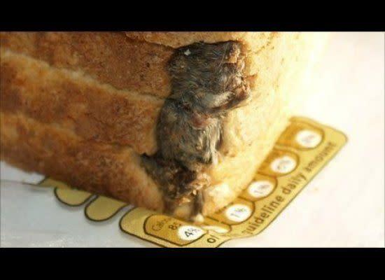 """In 2009, a man from Bath, England, found <a href=""""http://www.huffingtonpost.com/2010/09/30/dead-mouse-found-in-bread-photo_n_745069.html"""" rel=""""nofollow noopener"""" target=""""_blank"""" data-ylk=""""slk:a dead mouse in a loaf of bread"""" class=""""link rapid-noclick-resp"""">a dead mouse in a loaf of bread</a>."""