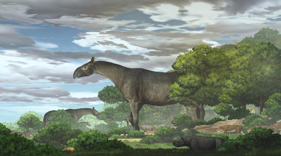 Ecological reconstruction of giant rhinos and their accompanying fauna in the Linxia Basin during the Oligocene (CHEN Yu)