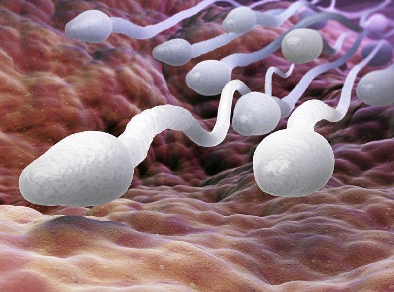 Sperm travel in male pornographers