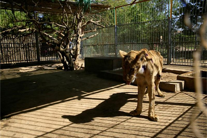 Bengaluru Zoo Reopens Nearly 3 Months after Covid-19-induced Lockdown
