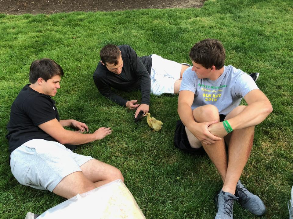 Patrick, Justin and Mitchell Herbert play with ducks at their family home. (Photo credit: Herbert family)