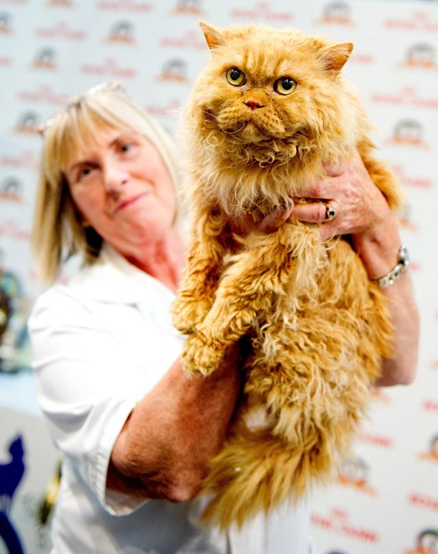 <p>A cat named Joshua Purrkins participates in the GCCF Supreme Cat Show at National Exhibition Centre on October 28, 2017 in Birmingham, England. (Photo: Shirlaine Forrest/WireImage) </p>
