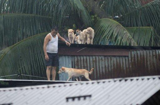 A resident gathers his pet dogs on the roof of his flooded house in the village of Tumana, Marikina town, suburban Manila, on August 7, 2012. The Philippines endures about 20 major storms or typhoons each rainy season, many of which are deadly
