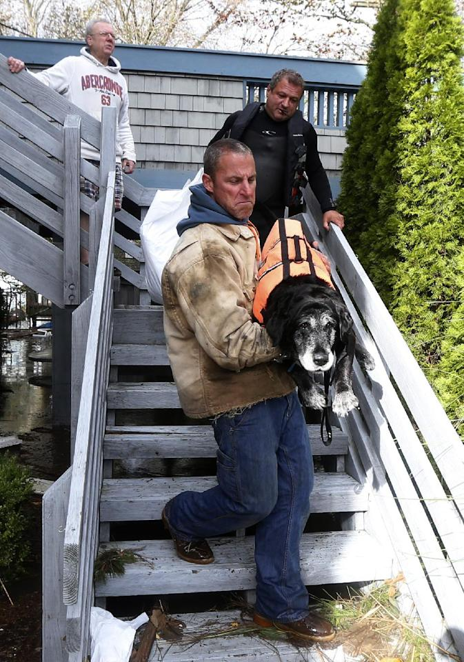FILE - In this Oct. 30, 2012, file photo, Brian Hajeski carries a dog named Junior as he and a group of men rescue neighbors in Brick, N.J., in the aftermath of Superstorm Sandy. The storm drove New York and New Jersey residents from their homes, destroyed belongings and forced them to find shelter for themselves - and for their pets, said owners, who recounted tales of a dog swimming through flooded streets and extra food left behind for a tarantula no one was willing to take in. (AP Photo/Julio Cortez, File)