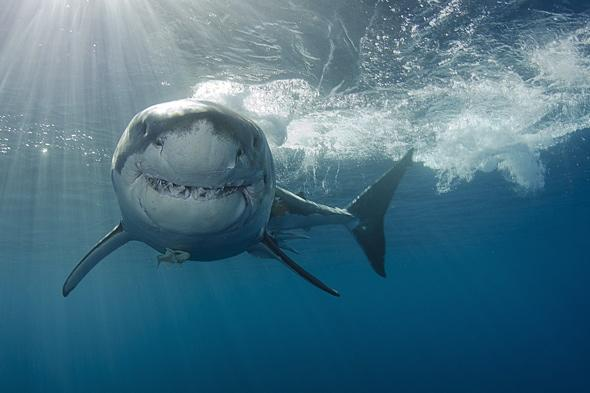 underwater-photography-competition-pics