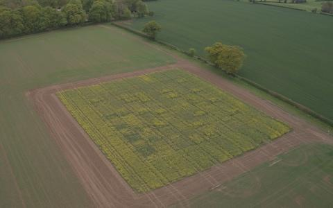 Field trials in Norfolk have shown that crops benefit from warmer Octobers