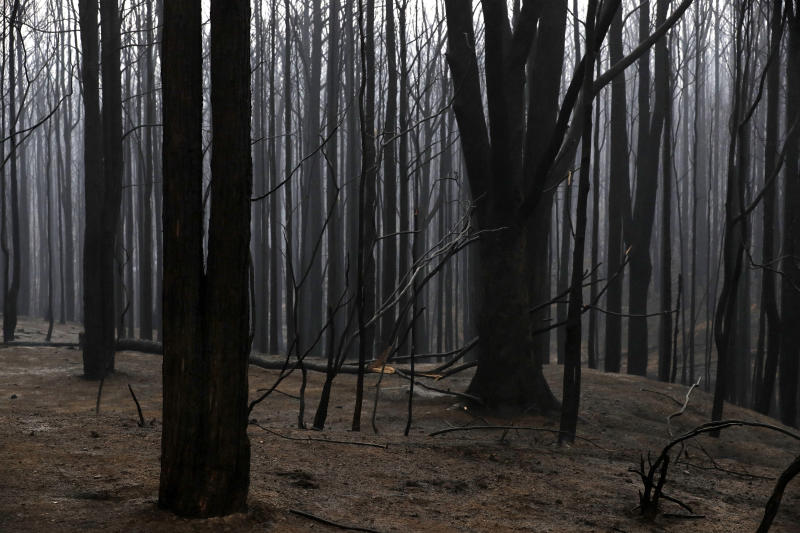 Blackened trees poke through the scorched ground after a wildfire ripped through near Kangaroo Valley, Australia, Sunday, Jan. 5, 2020. The deadly wildfires, which have been raging since September, have already burned about 5 million hectares (12.35 million acres) of land and destroyed more than 1,500 homes. (AP Photo/Rick Rycroft)