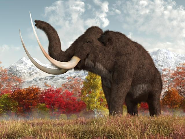 The last mammoths faced an ignominious end (Getty)