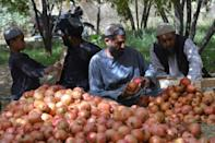 Frequent border issues with Pakistan mean thousands of tonnes of pomegranates are at risk of rotting on trucks (AFP/Javed TANVEER)