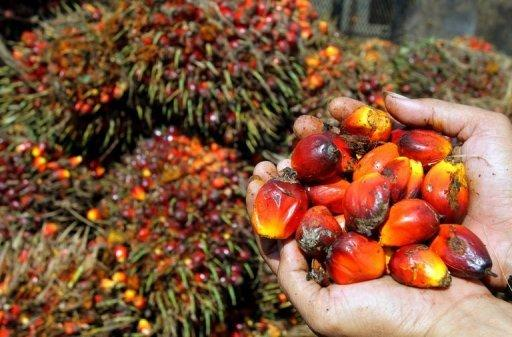 Indonesian court fines palm oil giant for tax evasion