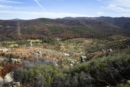 New growth is seen alongside damage caused by the 2013 Rim Fire in the Stanislaus National Forest in California May 30, 2014. REUTERS/Elijah Nouvelage