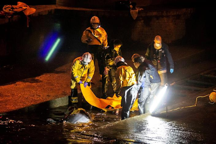 Rescue personnel work to save a small whale stranded in the River Thames in this picture obtained via social media, in London, Britain, May 9, 2021.