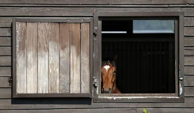 Horse racing in Britain has been suspended since March (AFP Photo/ADRIAN DENNIS)