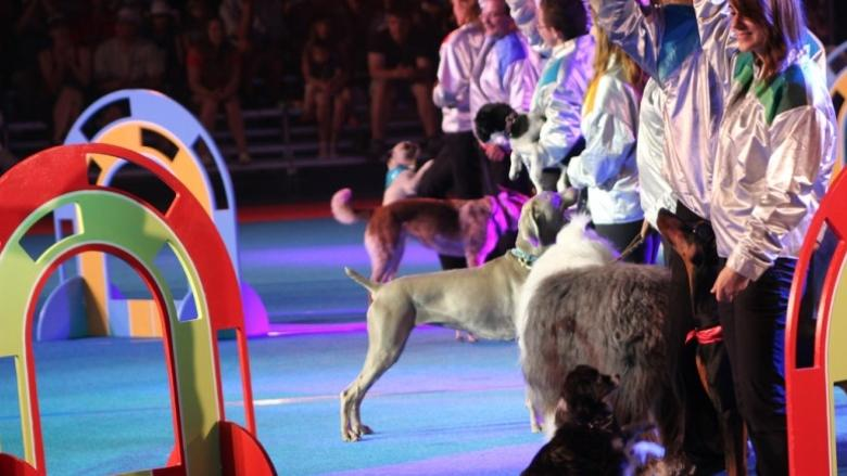 Calgary Stampede cancels Superdogs in favour of U.S. company, irking Canadian organizers