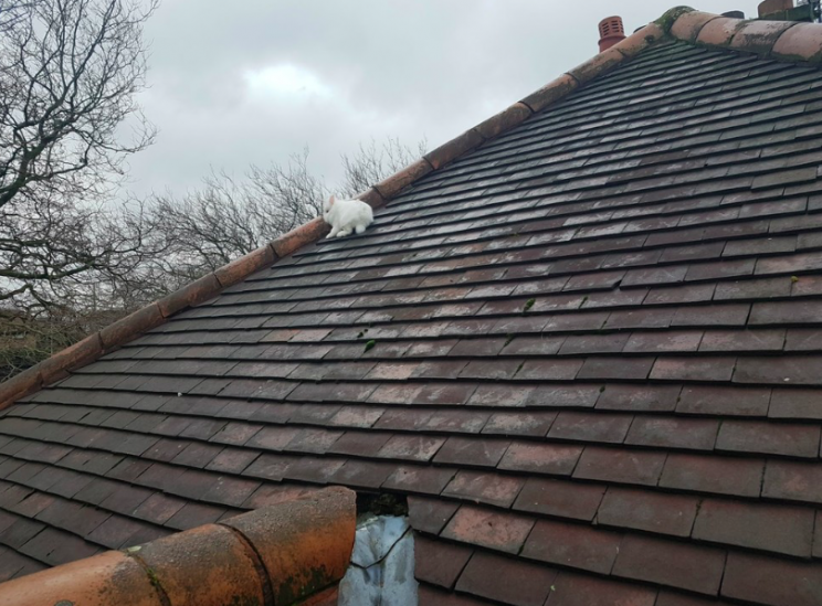 Mystery: No one knows how Lily actually got onto the roof (RSPCA)