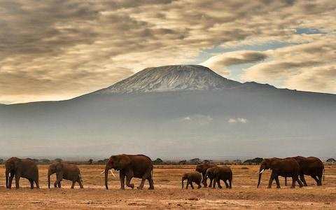 Kilimanjaro - Credit: AFP or licensors/CARL DE SOUZA