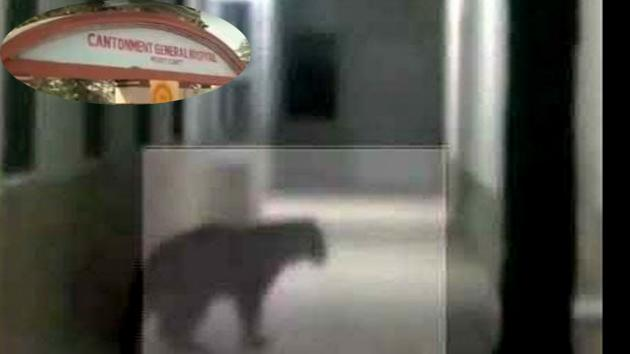 A leopard entered the Cantonment Hospital on Sunday, triggering panic and chaos among patients, hospital staffs and passerby.