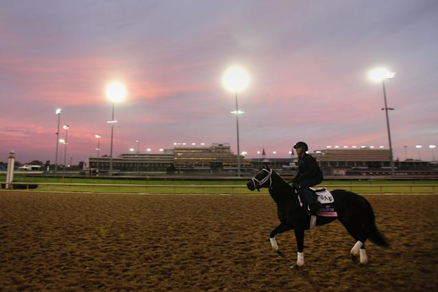 LOUISVILLE, KY - NOVEMBER 03: Breeders' Cup Juvenile Fillies Turf hopeful Stopshoppingmaria goes over the track during morning workouts for the upcoming Breeders' Cup World Championships at Churchill Downs on November 3, 2011 in Louisville, Kentucky. (Photo by Rob Carr/Getty Images)