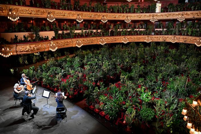 """<h1 class=""""title"""">TOPSHOT-SPAIN-HEALTH-VIRUS-CULTURE-MUSIC</h1> <div class=""""caption""""> Performers inside of Bracelona's Gran Teatre del Liceu play for an audience of 2,292 plants. </div> <cite class=""""credit"""">Photo: Getty Images</cite>"""