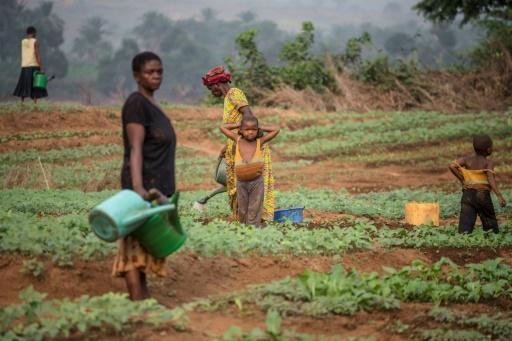 Conflict leaves millions hungry in DR Congo, UN warns