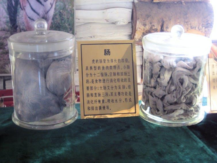 Two jars with grey animal parts