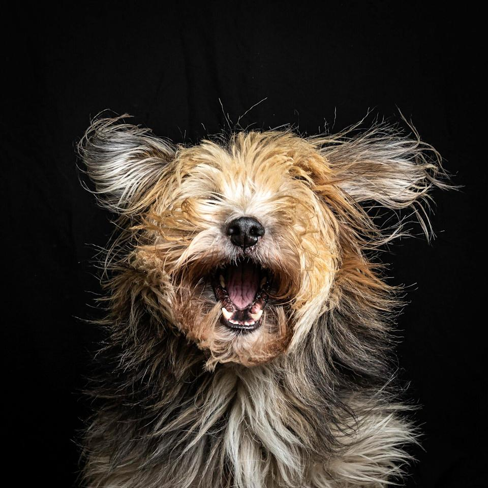 Mars Petcare Comedy Pet Photo Awards (Photo: ©Hetwie-van-der-Putten/Mars Petcare Comedy Pet Photo Awards 2020)