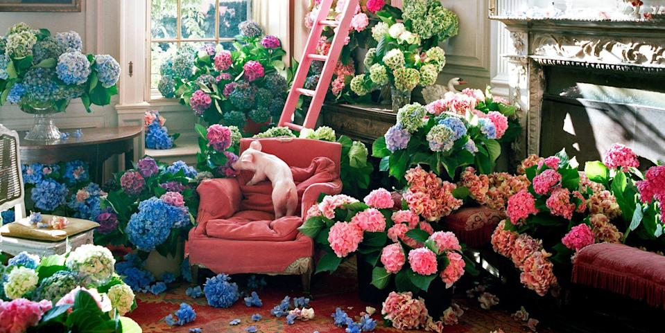 Photo credit: Tim Walker Studio