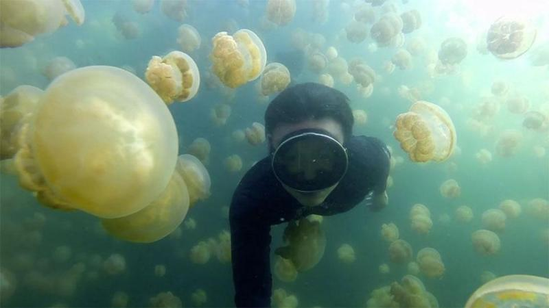 Would you dare to swim through jellyfish infested waters like this brave American? Source: Supplied.