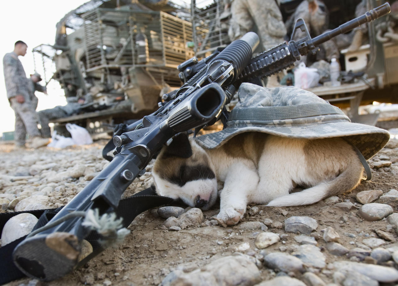 A puppy sleeps under a U.S soldier's hat and rifles in Baquba, in Diyala province some 65 km (40 miles) northeast of Baghdad November 6, 2008. REUTERS/Goran Tomasevic      (IRAQ)