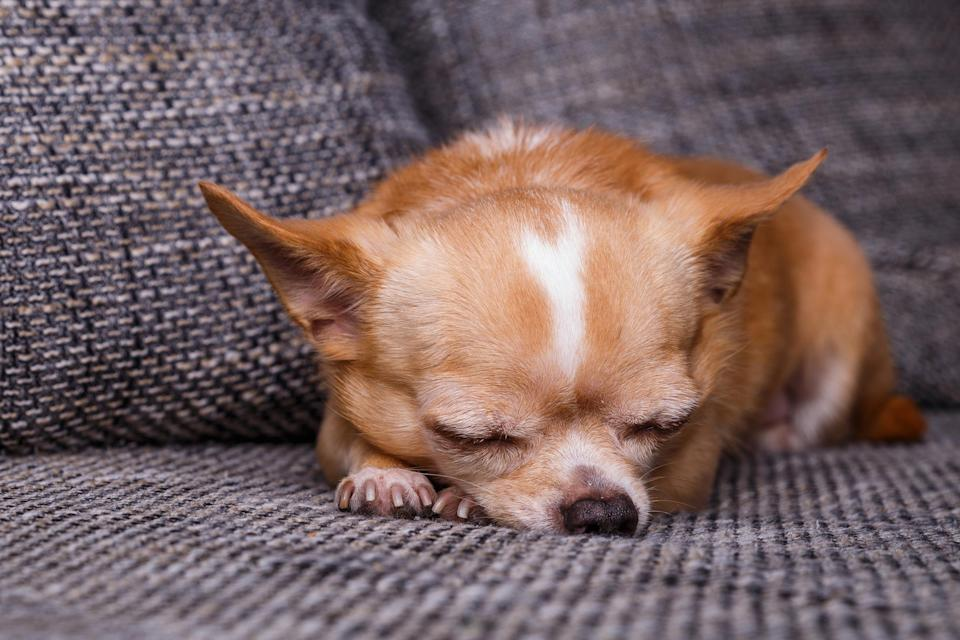 You know that your pup requires excessive amounts of shut-eye time sometimes, but how much do dogs sleep, really?