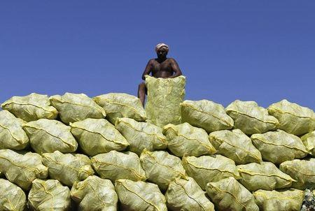 A labourer unloads bags filled with cabbage from a supply truck at a vegetable wholesale market in Chennai