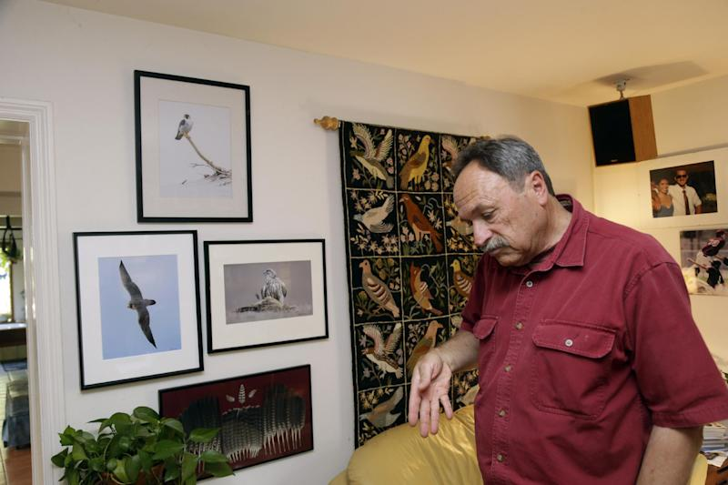 In this June 19, 2013, photo, biologist Glenn Stewart in explains the flight pattern of peregrine falcons at home in Santa Cruz, Calif. After decades of scrambling on the underside of California bridges to pluck endangered peregrine falcon fledglings teetering in ill-placed nests, inseminating female birds and releasing captive-raised chicks, wildlife biologists have been so successful in bringing back the powerful raptors that they now threaten Southern California's endangered shorebird breeding sites.As a result, the U.S. Fish and Wildlife Service says it will no longer permit high profile peregrine chick rescues from Bay Area bridges, a move which they concede will likely lead to fluffy chicks tumbling into the water below and drowning next spring. (AP Photo/Marcio Jose Sanchez)