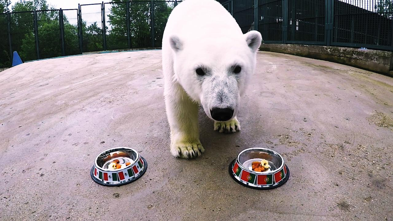 The two-year-old star attraction of the Moscow Zoo has taken to making match predictions for this summer's tournament in Russia