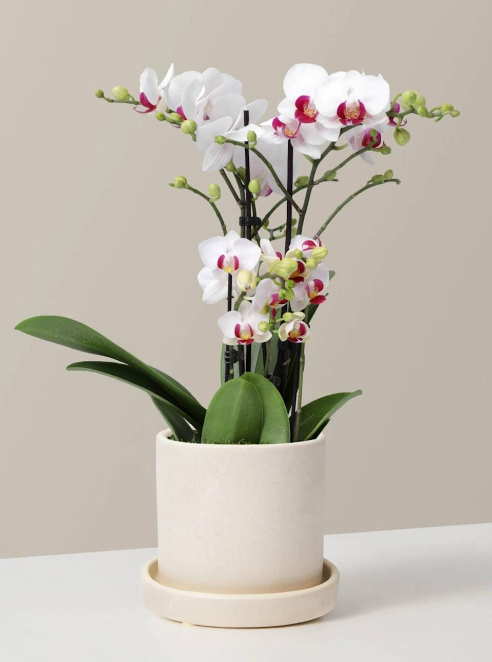 """Home is where the <del>WiFi</del> plants are—and The Sill is a one-stop-shop for potted, <a href=""""https://www.glamour.com/gallery/houseplants-for-beginners?mbid=synd_yahoo_rss"""" rel=""""nofollow noopener"""" target=""""_blank"""" data-ylk=""""slk:beginner-friendly options"""" class=""""link rapid-noclick-resp"""">beginner-friendly options</a>. We're into this pretty white orchid because it's one of the easiest of its kind to grow, but the online retailer has everything from <a href=""""https://cna.st/affiliate-link/DBDZJrJC3N2Eyr17FBJscxbwJBpDGEUU8KyMkYe7bg9YKv7V3zURbm98NyDSrjXik83nCPdd6hecSoeLg3bH3SxEx4RY7ckBNE7SoZT6sc5eSFYfqKfx899Bqizxf5p?cid=608189fb24ab1f022e3863c8"""" rel=""""nofollow noopener"""" target=""""_blank"""" data-ylk=""""slk:ZZ Plants"""" class=""""link rapid-noclick-resp"""">ZZ Plants</a> to lush <a href=""""https://cna.st/affiliate-link/56DCwaYCWvGPjHXmienrVz5opS6W4evTDbt7hPxRtz7JgjNTf5LXLNYaJCWhbvAAaAFLfMo8wmaYxyHyFiLnd7hkP9zS3PGrTeYe2a2SsFoFbPeb3tDXJkmJER96F5WWaR?cid=608189fb24ab1f022e3863c8"""" rel=""""nofollow noopener"""" target=""""_blank"""" data-ylk=""""slk:Monsteras"""" class=""""link rapid-noclick-resp"""">Monsteras</a>. The Sill ships nationwide; just make sure to order ahead of time since it doesn't offer next-day delivery. $98, White Orchid. <a href=""""https://www.thesill.com/products/white-orchid?"""" rel=""""nofollow noopener"""" target=""""_blank"""" data-ylk=""""slk:Get it now!"""" class=""""link rapid-noclick-resp"""">Get it now!</a>"""