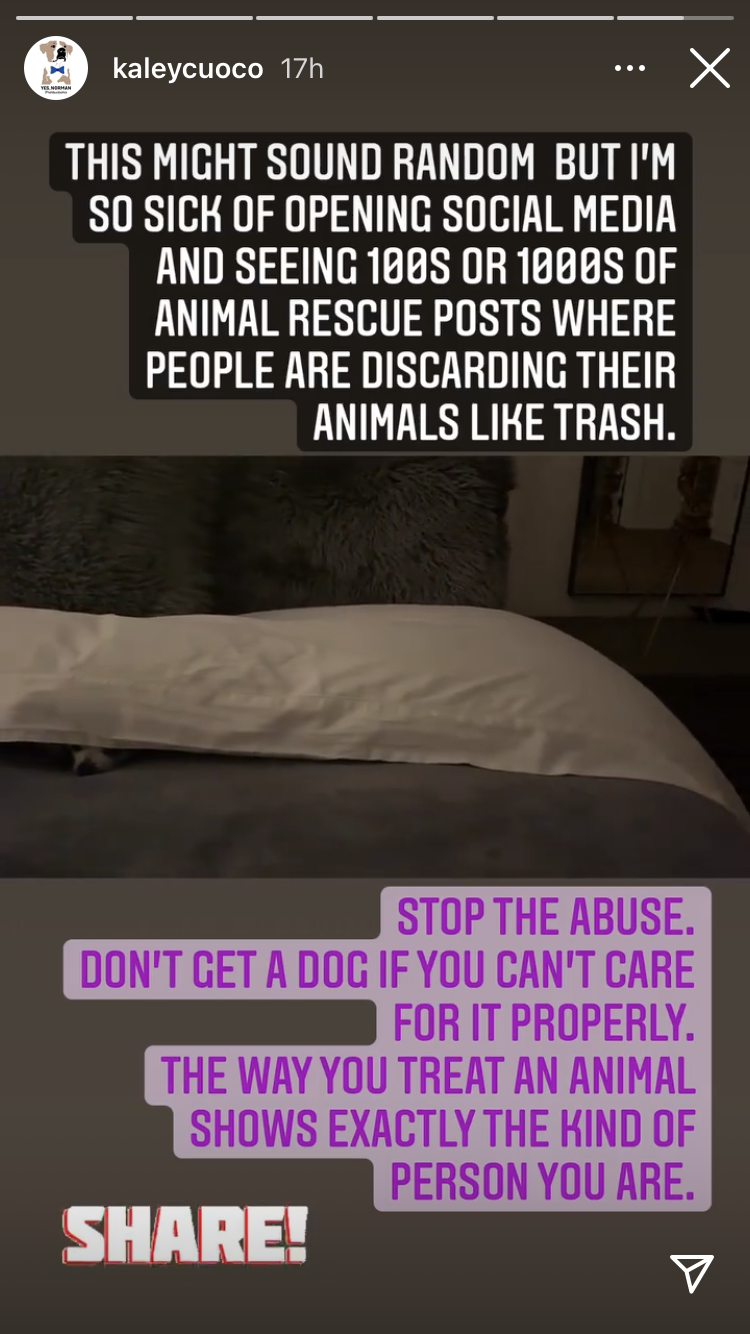 "Cuoco scolded pet owners who treat their ""animals like trash."" (Photo: Instagram Stories)"