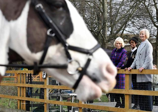 Camilla, Duchess of Cornwall, watches a riding display during her visit to the Ebony riding club in Brixton on February 16, 2017, to celebrate the charity's 21st anniversary (AFP Photo/Hannah MCKAY)