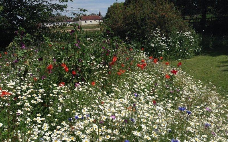 Walk through meadows of wild-flowers at The Thatched Cottage, or visit the beautifully restored gypsy camper van - National Garden Scheme