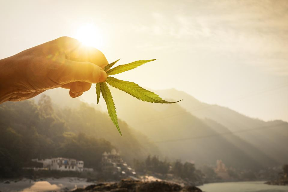 Leaf of cannabis in the hand in the setting sun on blurred background beautiful mountain landscape. Concept breeding of marijuana, cannabis, legalization.