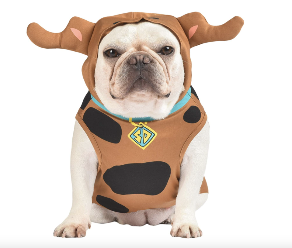 white puppy wearing brown Warner Brothers Scooby-Doo Costume