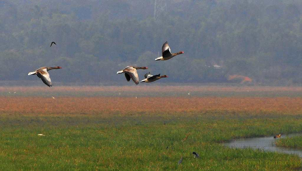<b>14.Mangalajodi, Orissa </b><br><br>A small village in Odisha has made it to the tourist map as it has become one of the birding hotspots in India. Located at the fringe of the Chilka Lake, Mangalajodi is home to several wetland birds and offers opportunities for sustainable ecotourism. During the migratory season, more than a lakh of birds visit this wetland. While at Mangalojodi, visit the many temples that dot this village and participate in local festivals as it also offers a peek into the culture and heritage of the locals here.