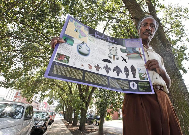 """Retired teacher and amateur birder, Adolph White, holds up a poster on purple martins under pear trees that the birds roost in Richmond, Va., Wednesday, Aug. 1, 2012. The birds once scorned for the droppings they leave, the tens of thousands of purple martins that check in each night in a small row of pear trees and are now celebrated with their own festival called """"Gone to the Birds."""" ( AP Photo/Steve Helber)"""