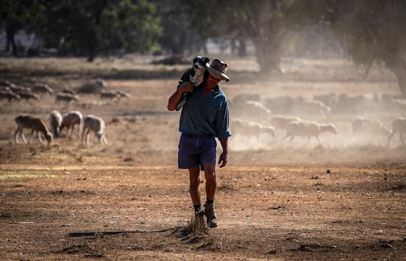 Australian farmer Richard Gillham carries his tired dog on his shoulder after feeding his sheep in a drought-affected paddock on his property 'Barber's Lagoon' located on the outskirts of the north-western New South Wales town of Boggabri.