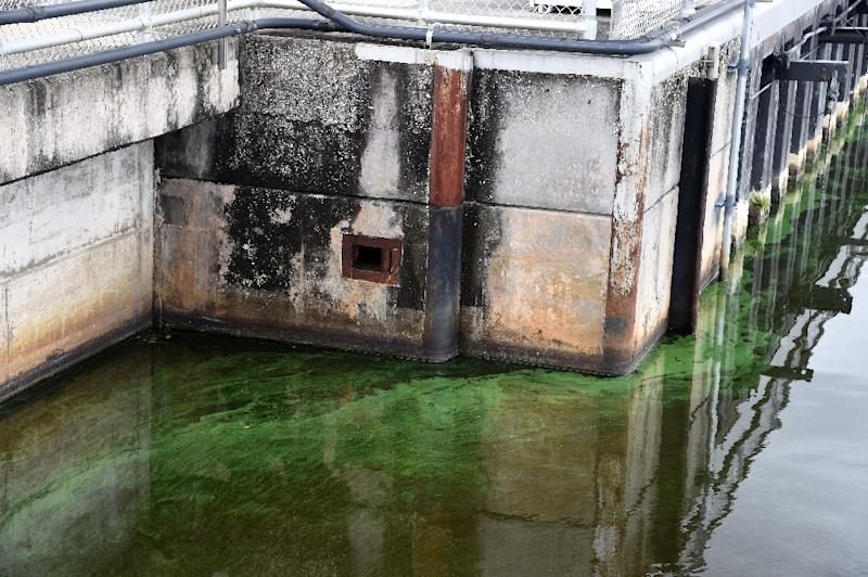 Algae's unsexy appearance of rotten porridge and ammonia smell frightens tourists (AFP Photo/Rhona Wise                   )