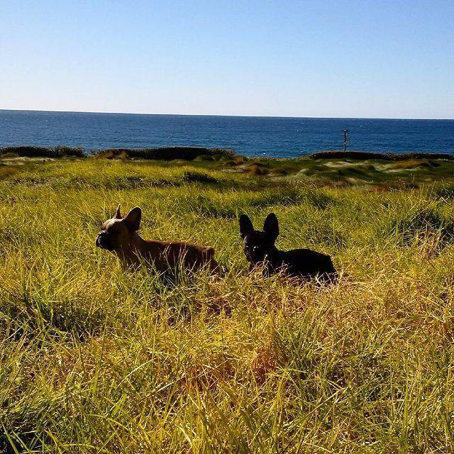 """<p>A sunny waterside photo of her pups was """"heaven,"""" the singer wrote in 2015.</p>"""